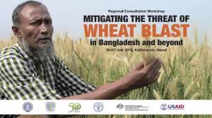 wheatblast_kathmandu_2016
